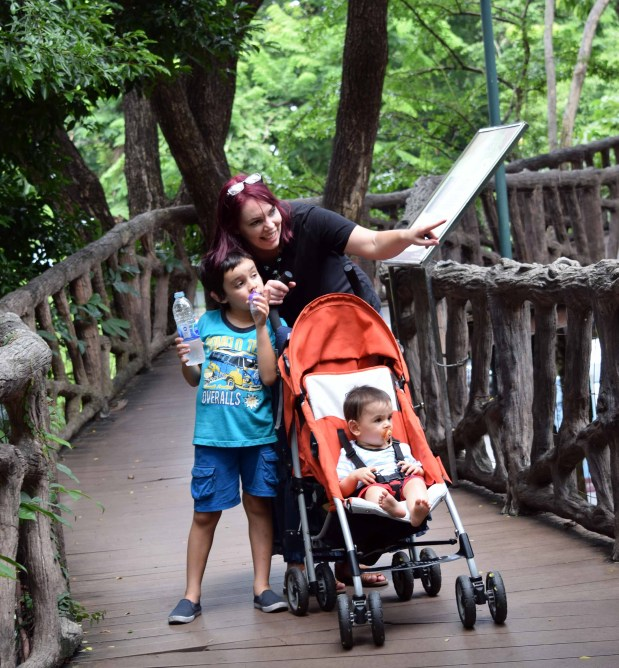 dusit-zoo-looking-at-animals