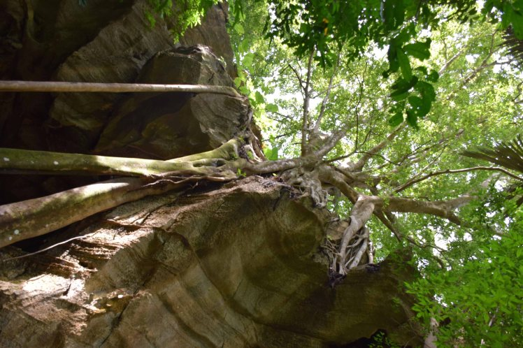tree-canopy-over-cave