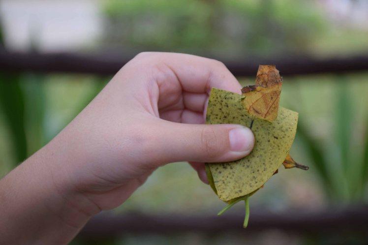 steve-the-leaf-man